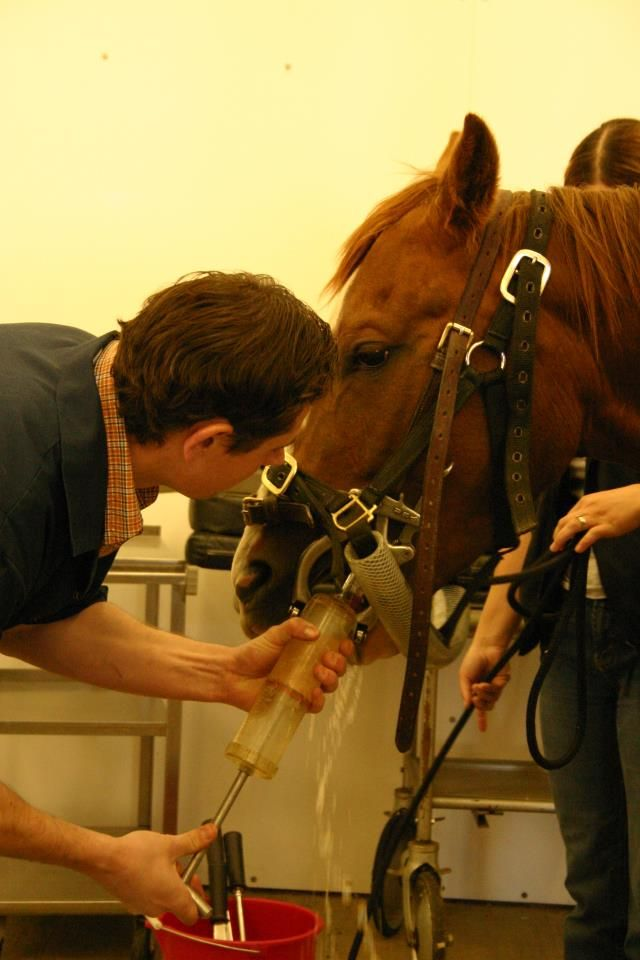 Abvma Alberta Veterinary Medical Association Veterinary Animals Care Dental