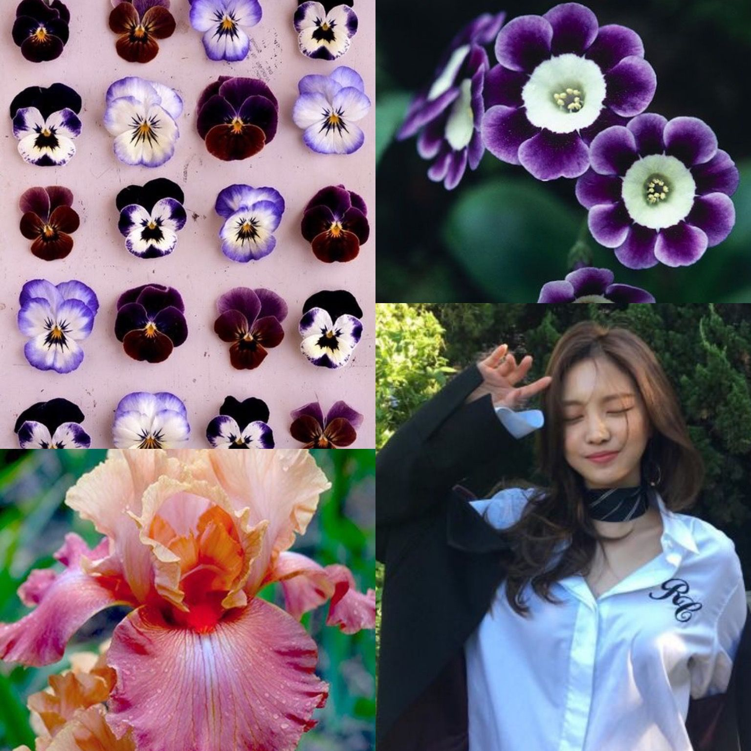 Birthflowerkpop Violets Iris Primrose Naeun Of Apink