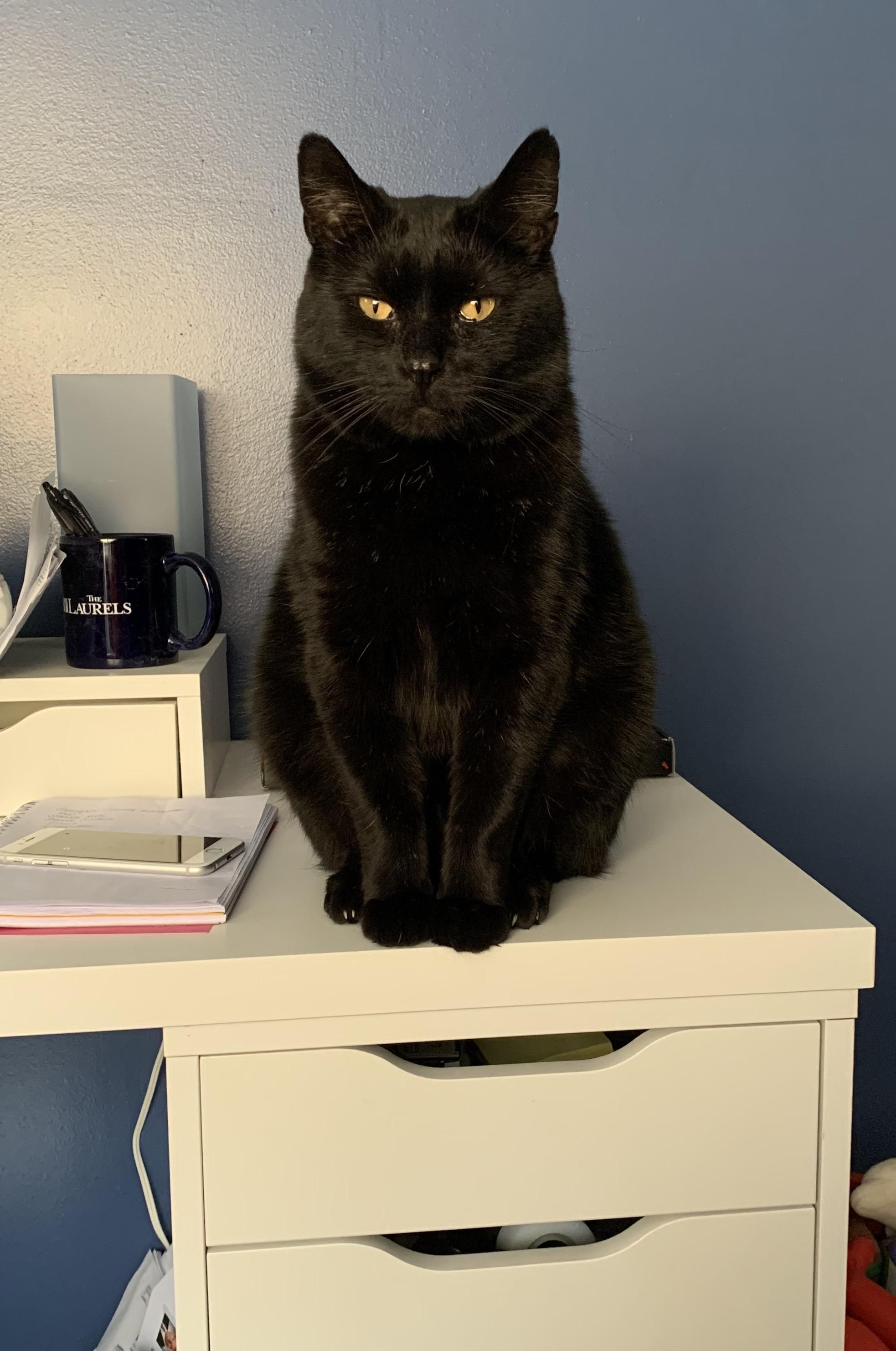 My Handsome Boy Mcgonagall He Came To Me As Stray With A Hurt