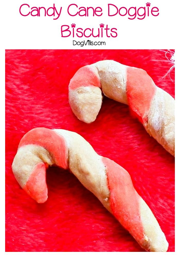 Candy Cane Doggie Biscuits With No Artificial Coloring Recipe