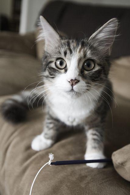 Kitten Kitten Storm