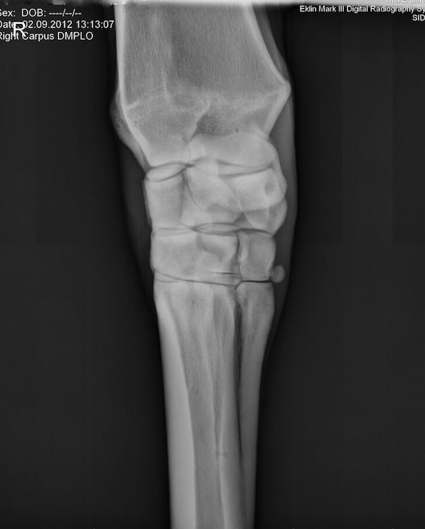 Radiograph, Carpus, Normal DMPLO Oblique View - One of five standard ...