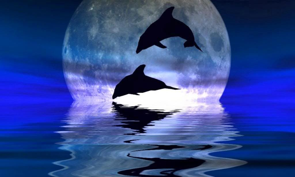 Silhoutte Dolphin Art Dolphin Images Dolphins
