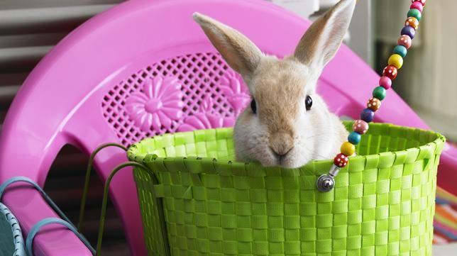 Rice bunny