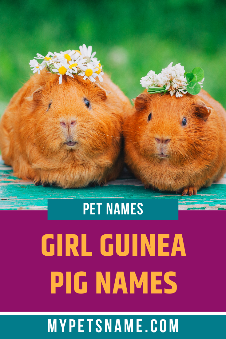 Pin On Girl Pet Names