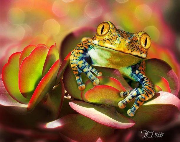 Beautiful frog.