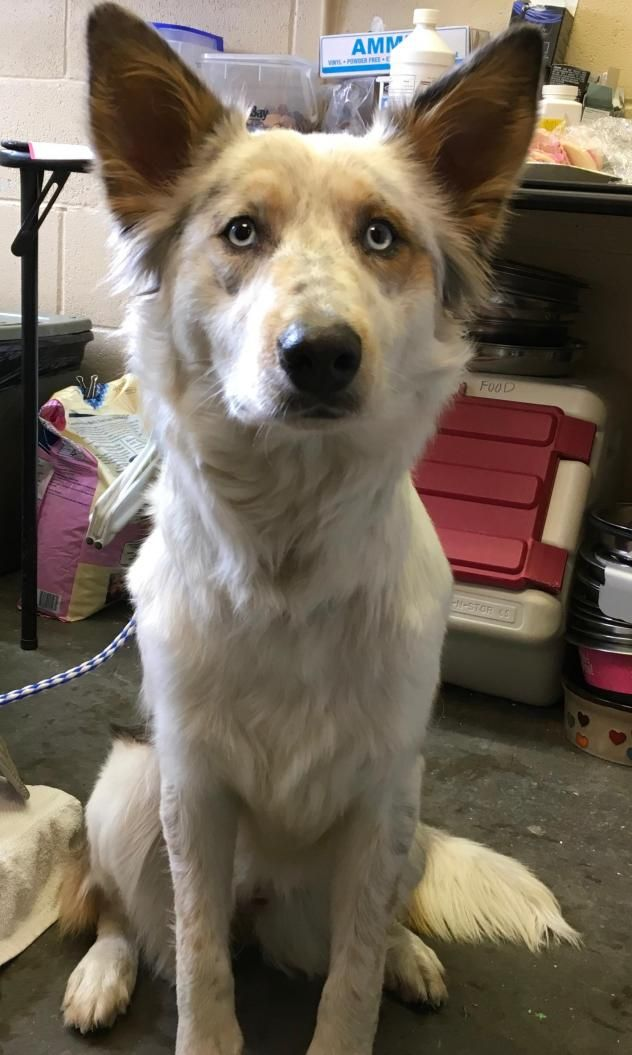 Adopt Sage On Petfinder Dog Adoption Nearest Animal Shelter Dogs