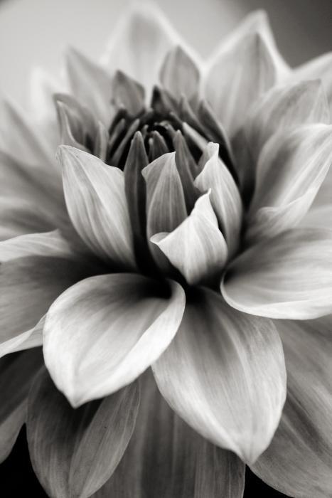 Pin von xyz auf blumenbilder | Pinterest | Schwarz und weiß ...