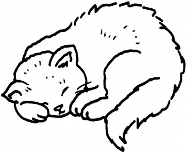 A Sweet Kitty Cat On Its Napping Session Coloring Page Kids Play
