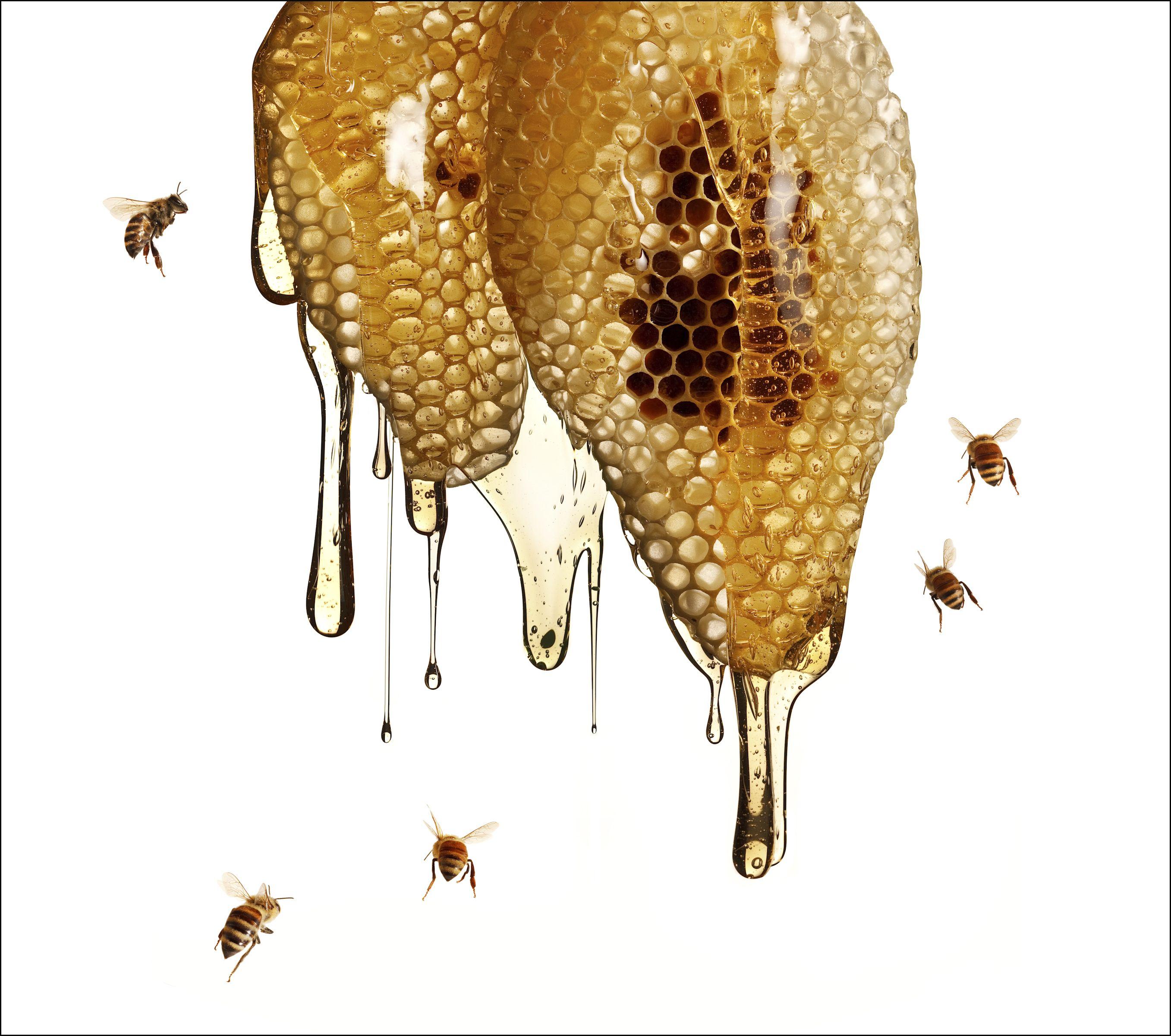 pin von edda frank auf bienen pinterest bienen honig und gartentipps. Black Bedroom Furniture Sets. Home Design Ideas
