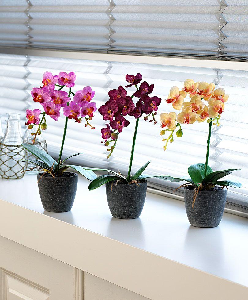 Phalaenopsis orchid modern vase ides pour la maison pinterest phalaenopsis orchid modern vase reviewsmspy