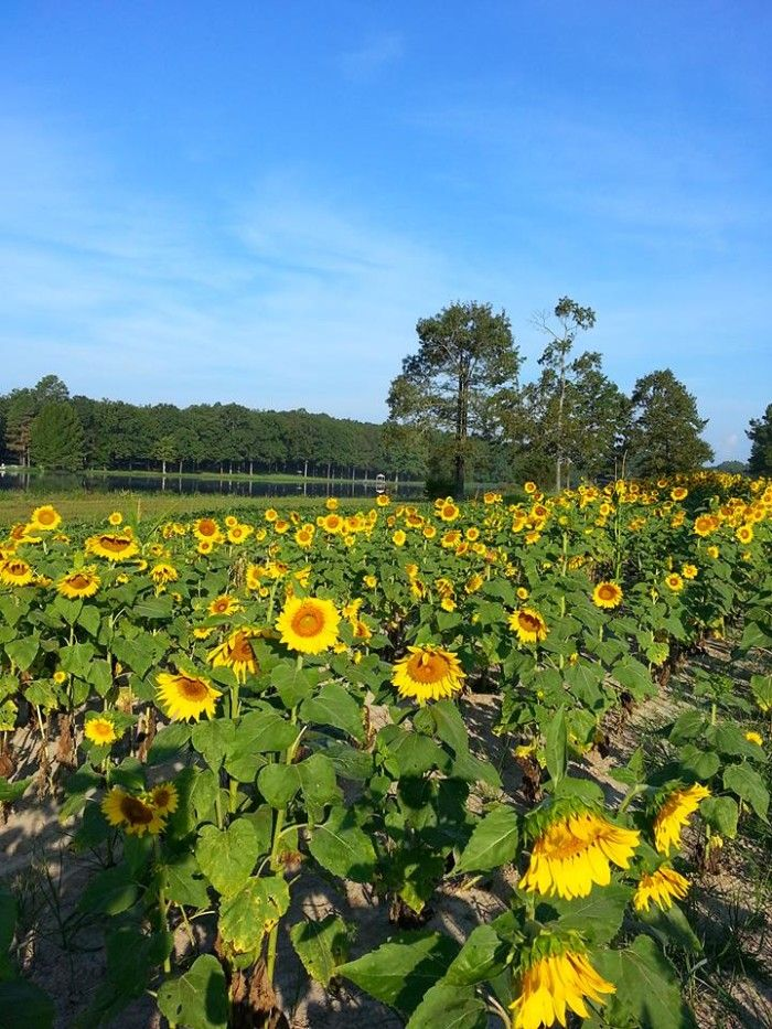 5. This bright and cheery photo was taken in Thelma by Pam Munlin McClendon.