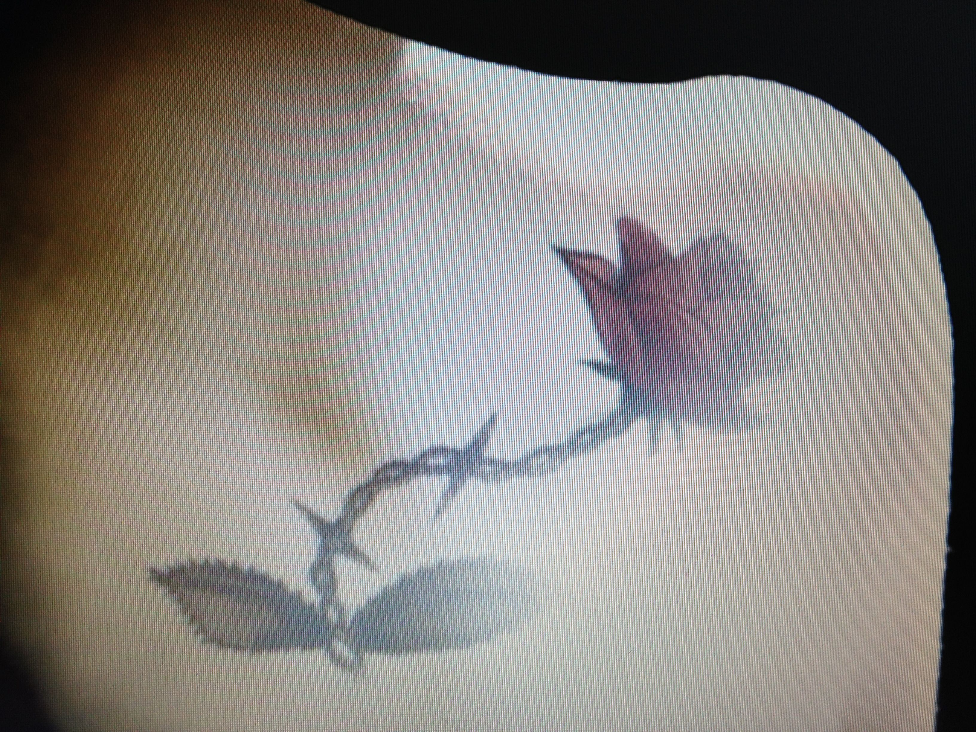 Rose with a chain and thorns. Love it .