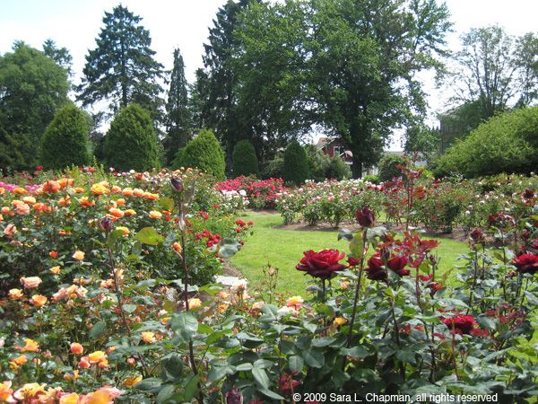 The Best Rose Gardens For More Flowers Around The World Click