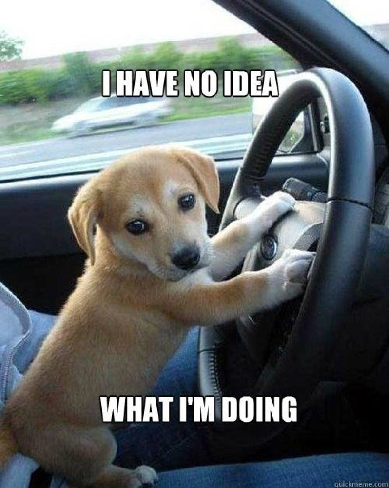 Dog Driving Meme : driving, Collection, Funny, Driving, Quotes, Memes, Dogs,, Puppies,, Adorable, Animals