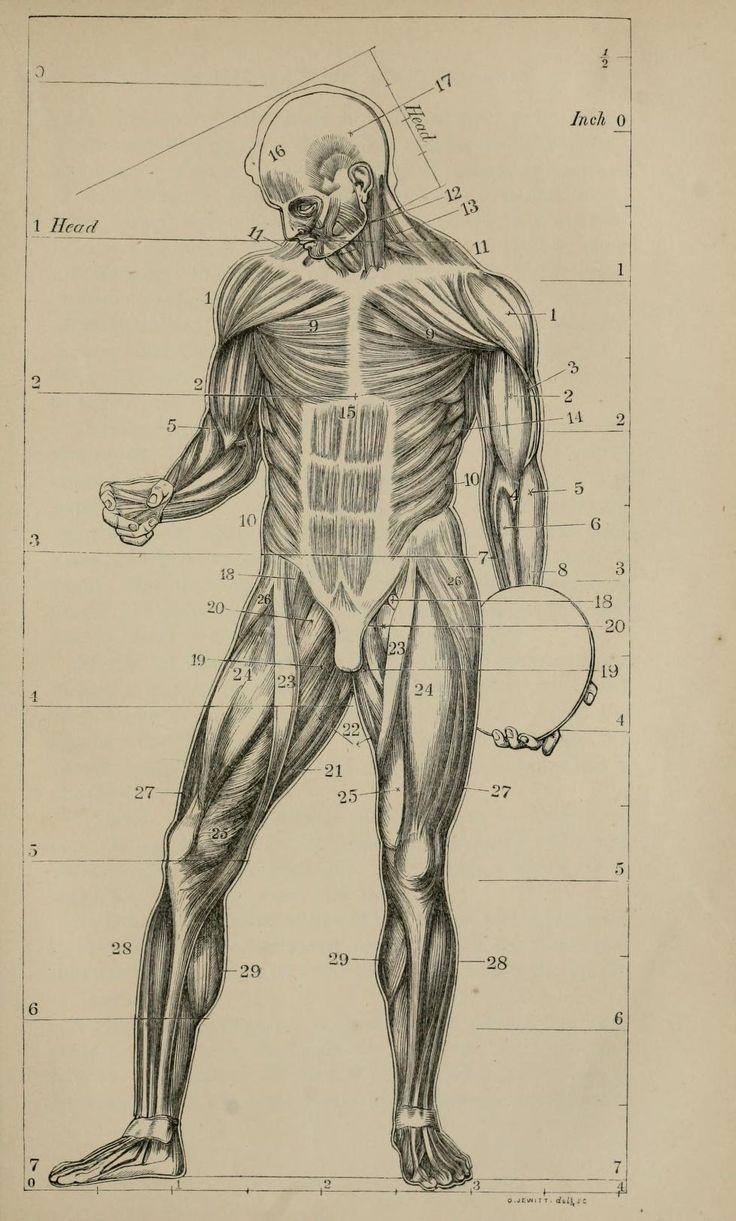 Anatomía humana (\