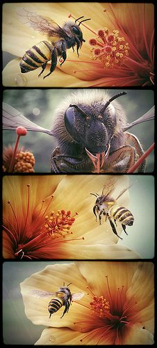 Abeja Video Perspectivaconica Com Abeille Art Peinture De Marguerite Abeille