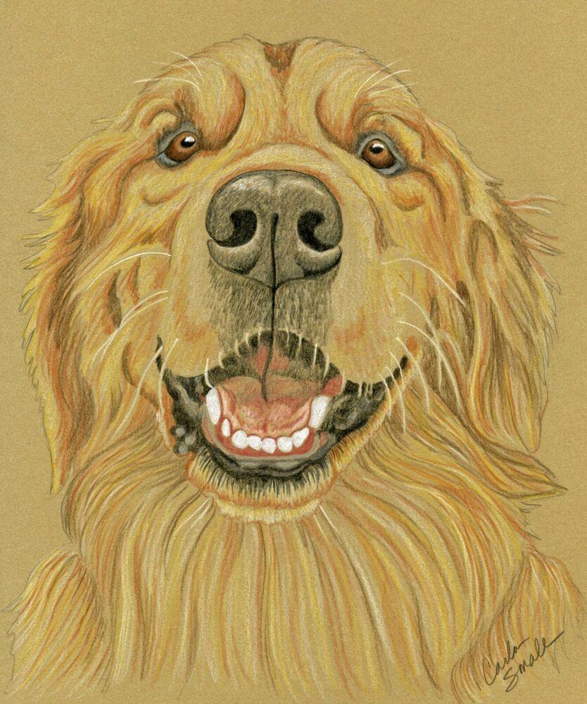 Golden Retriever Pet Dog Art Original 9 x 12 Pencil Painting Drawing