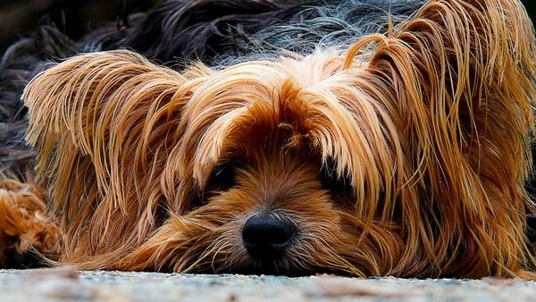 Dog Bite Insurance Claims Who Pays For Damages Dog Muzzle Training Your Dog Yorkshire Terrier Dog