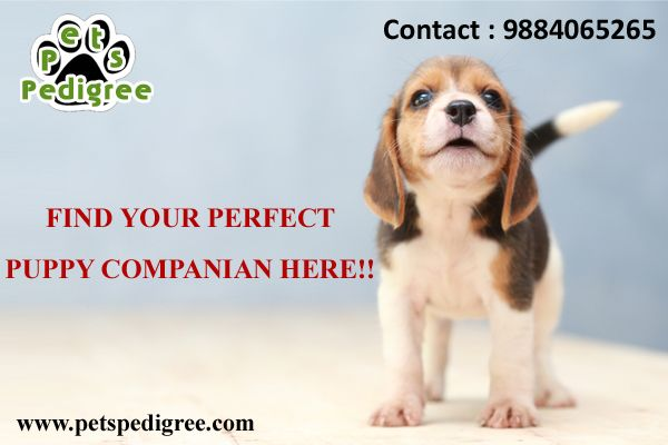 Petspedigree In 2020 Pets Dogs Breeds Pet Puppy Puppies