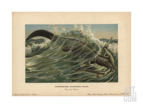 Tylosaurus Pelor, a Type of Mosasaur, a Large, Predatory Marine Lizard From the Cretaceous Giclee Print by F. John at Art.com