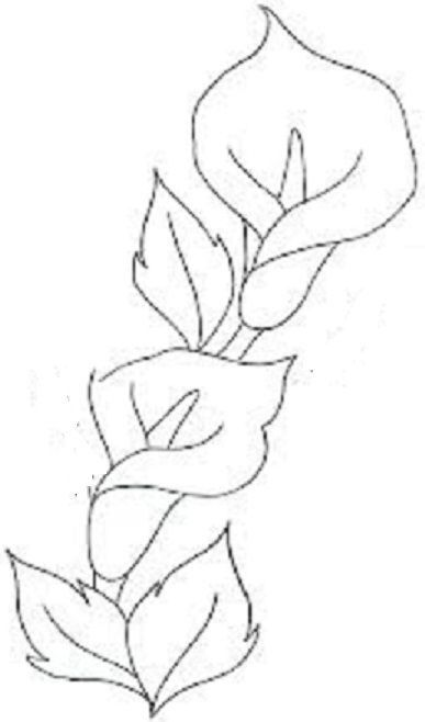 Flores Copo De Leite Drawing Pinterest Selyemszalas Himzes