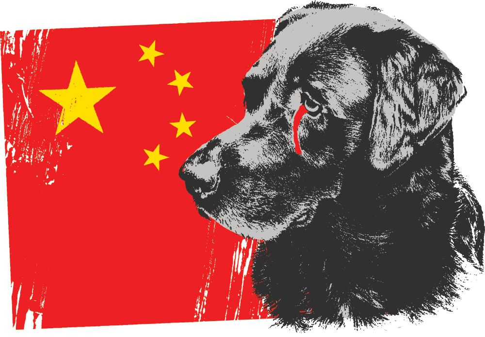Sign This Petition To End The Yulin Dog Meat Festival Dogs