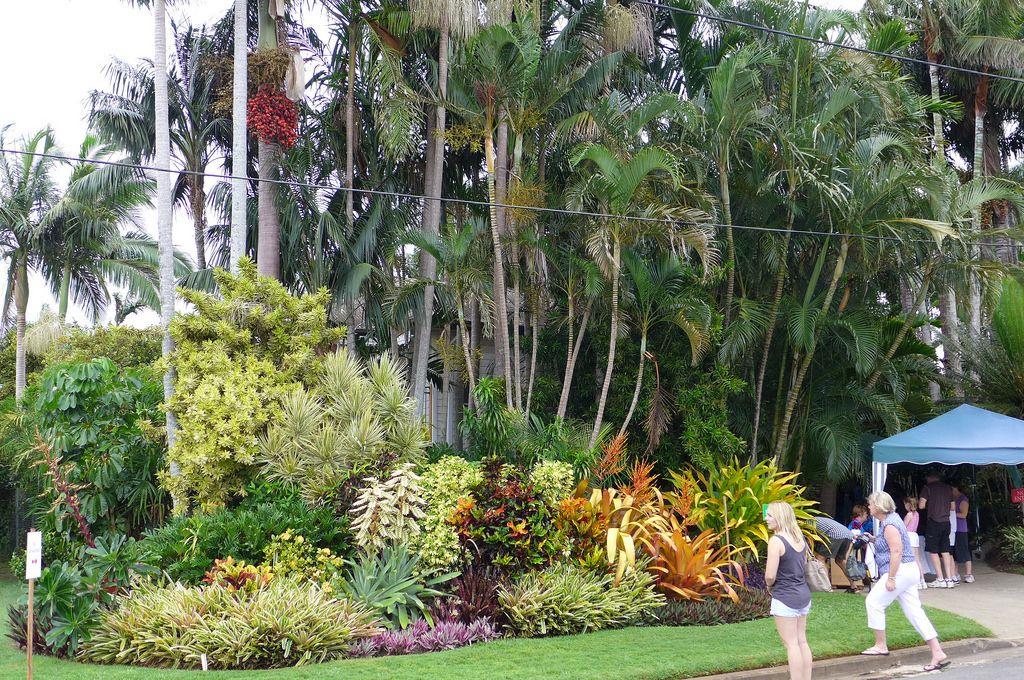 incredible tropical garden brisbane | Front garden, street frontage | Tropical garden design ...