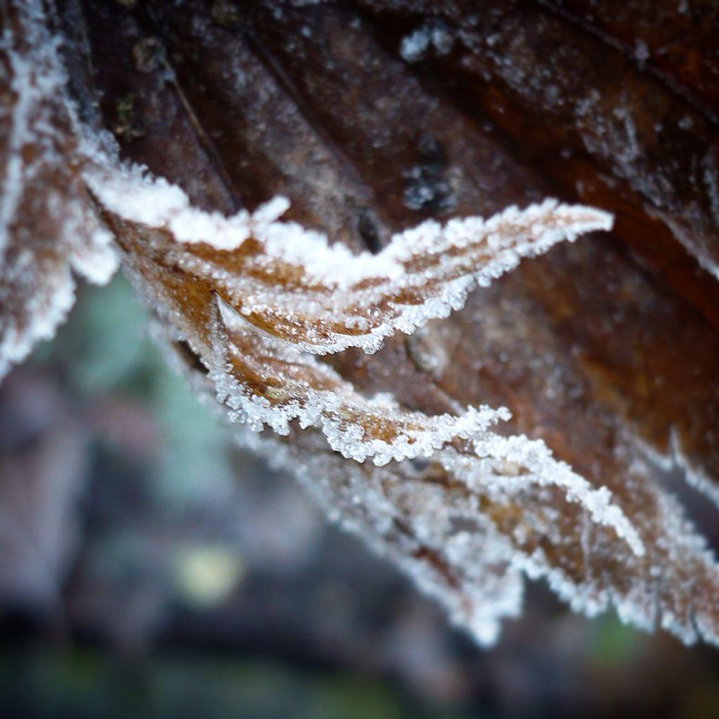 Winter in onze tuin.