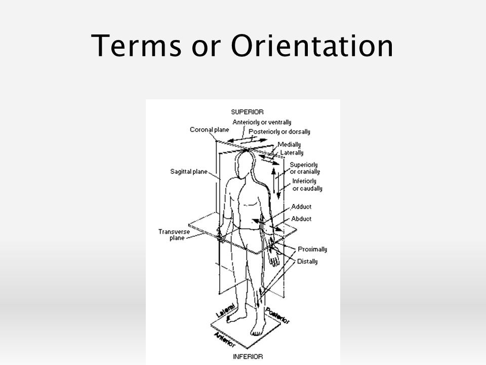 Image Result For Black And White Anatomical Terms Of Orientation And