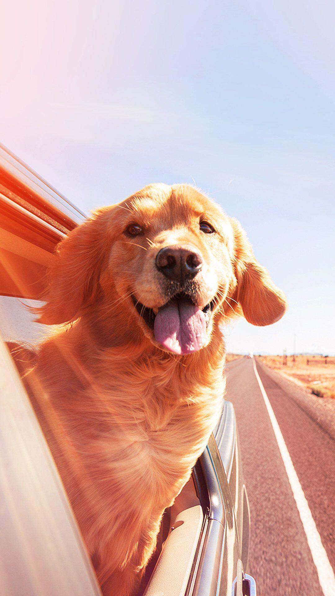 Photo of – Pets {Hashtags, #Hashtags #Pets # Beauty Animals – Pets {Hasht …