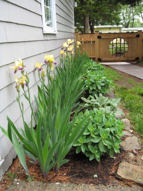 Welcome To Lereve Floral Design Lereve Floral Design Garden Landscape Design Outdoor Gardens Landscaping Dream Yard Garden
