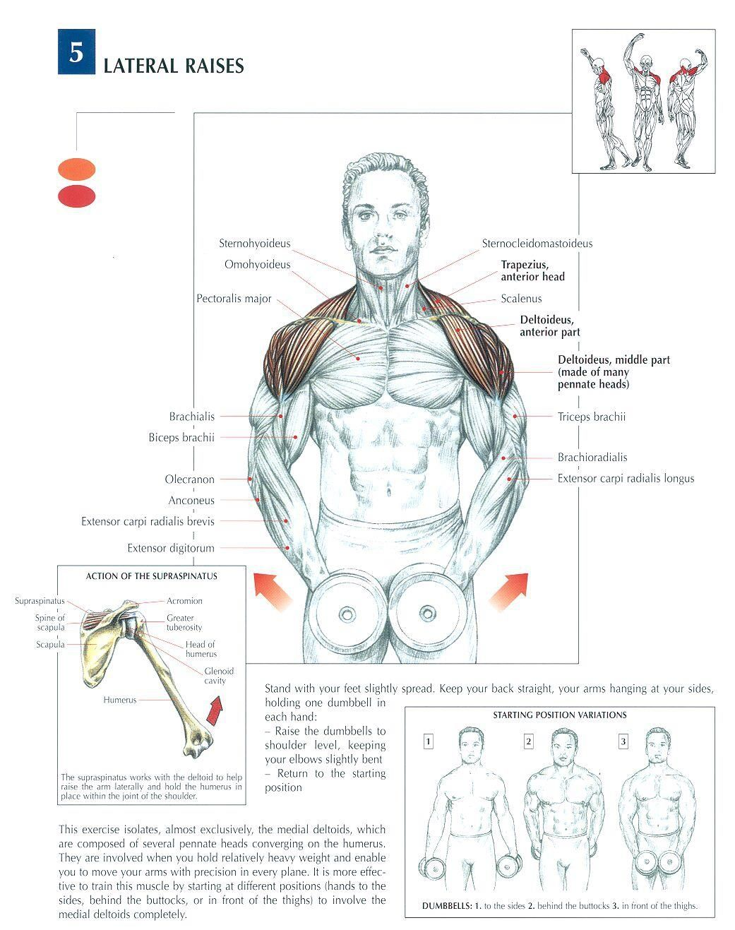 Dumbbell Lateral Raises ~ Re-pinned by Crossed Irons Fitness ...