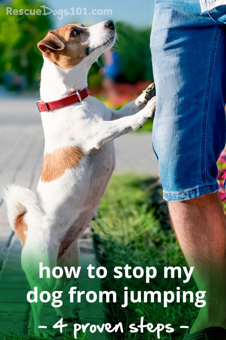 how to stop a dog from jumping on a person