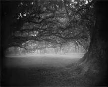 Sally Mann the South - Bing Images