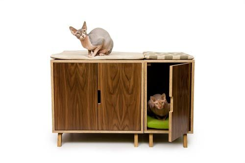 ▌寵物也住小套房/Modernist Cat