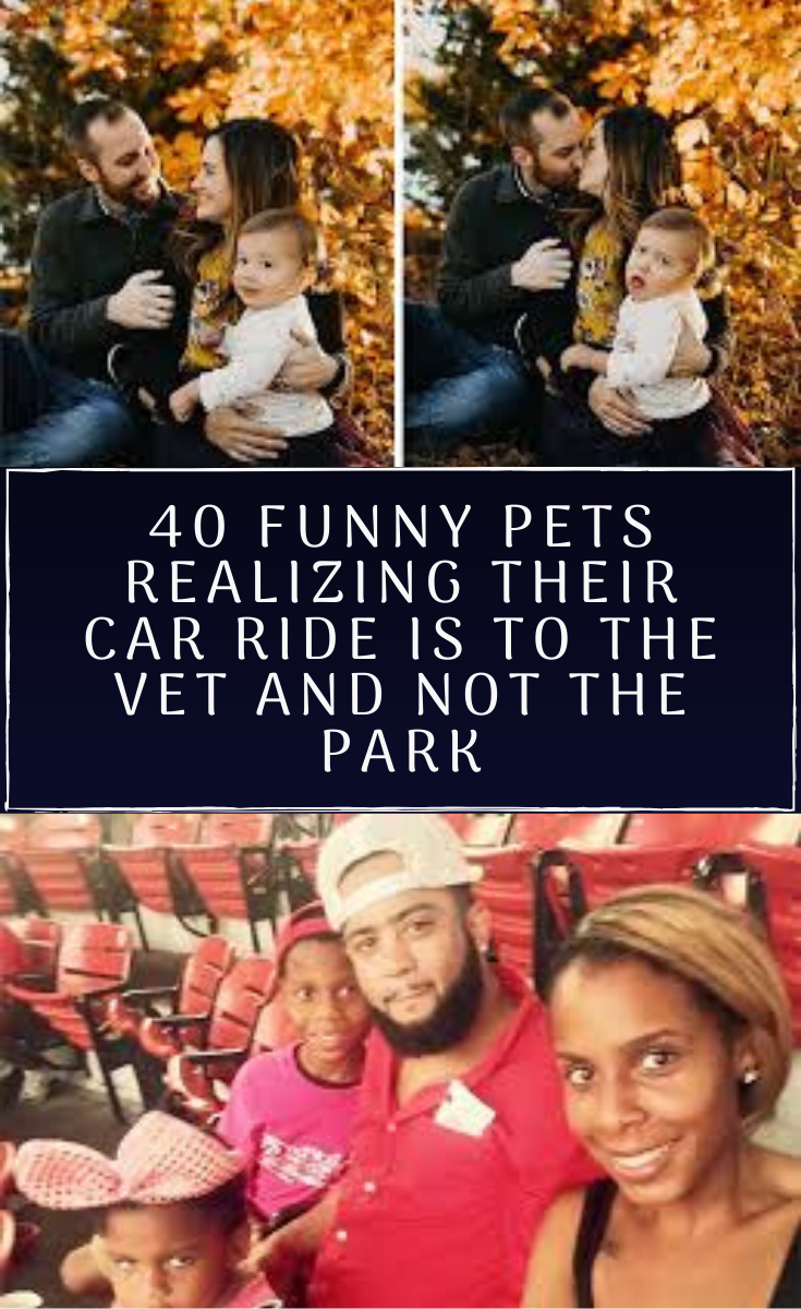 Latest Funny Pets 40 Funny Pets Realizing Their Car Ride Is To The Vet And Not The Park So many people want to be taller but do we actually know what it means to be tall?   40 Funny Pets #Realizing Their3 Car #Ride Is To The Vet And Not#The Park 5