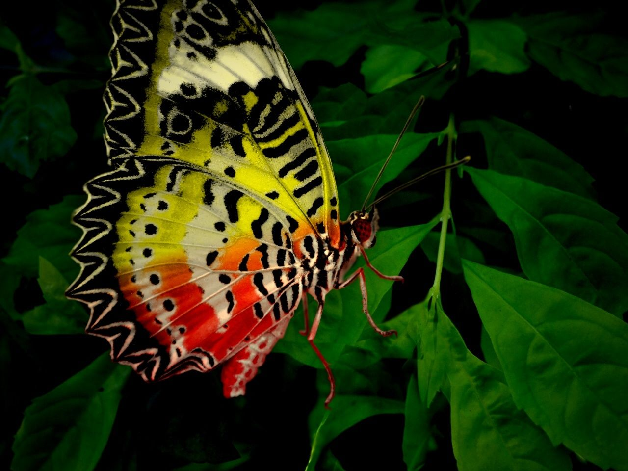 День дорожного, тропические бабочки картинки с названиями