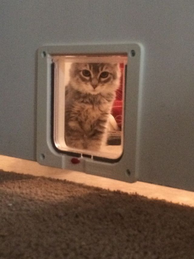 18 Cats That Would REALLY Like to Come Back Inside