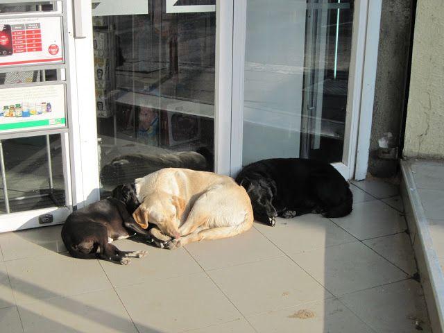 perros calentadose al sol