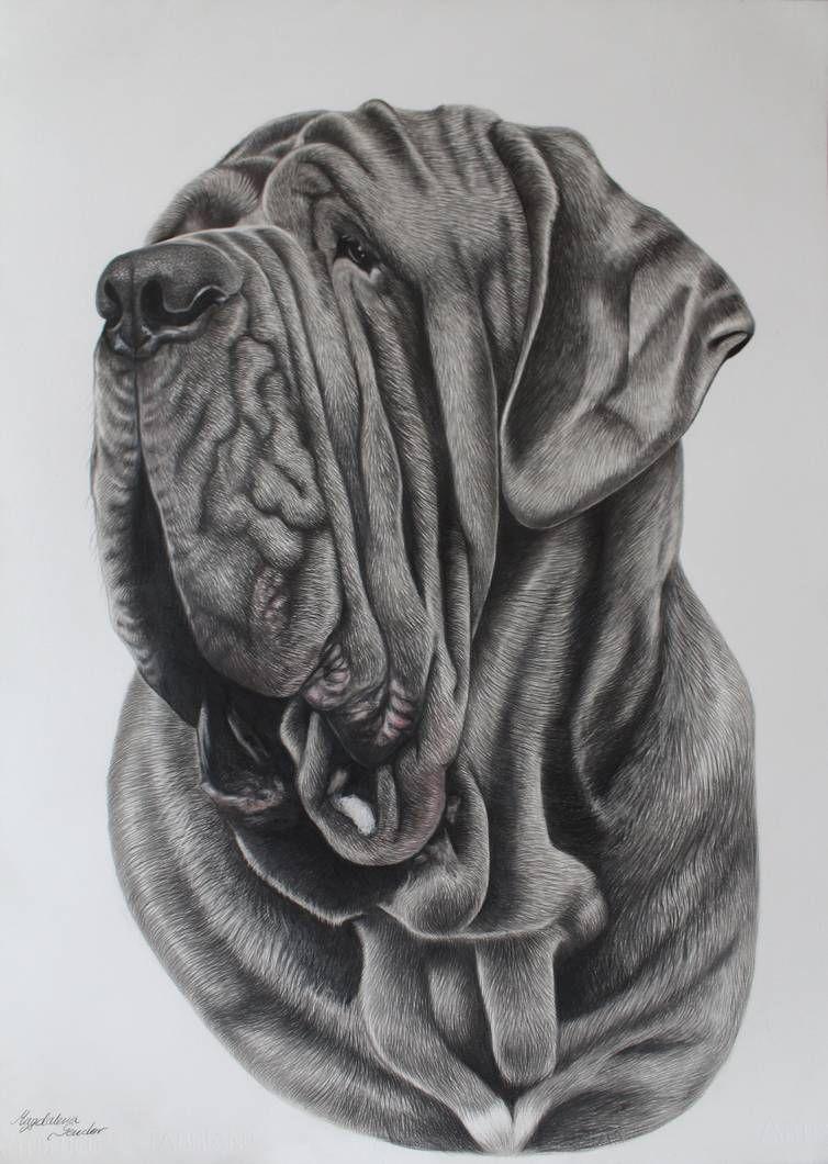 Neapolitan mastiff art | Dog art, Neapolitan mastiffs, Art