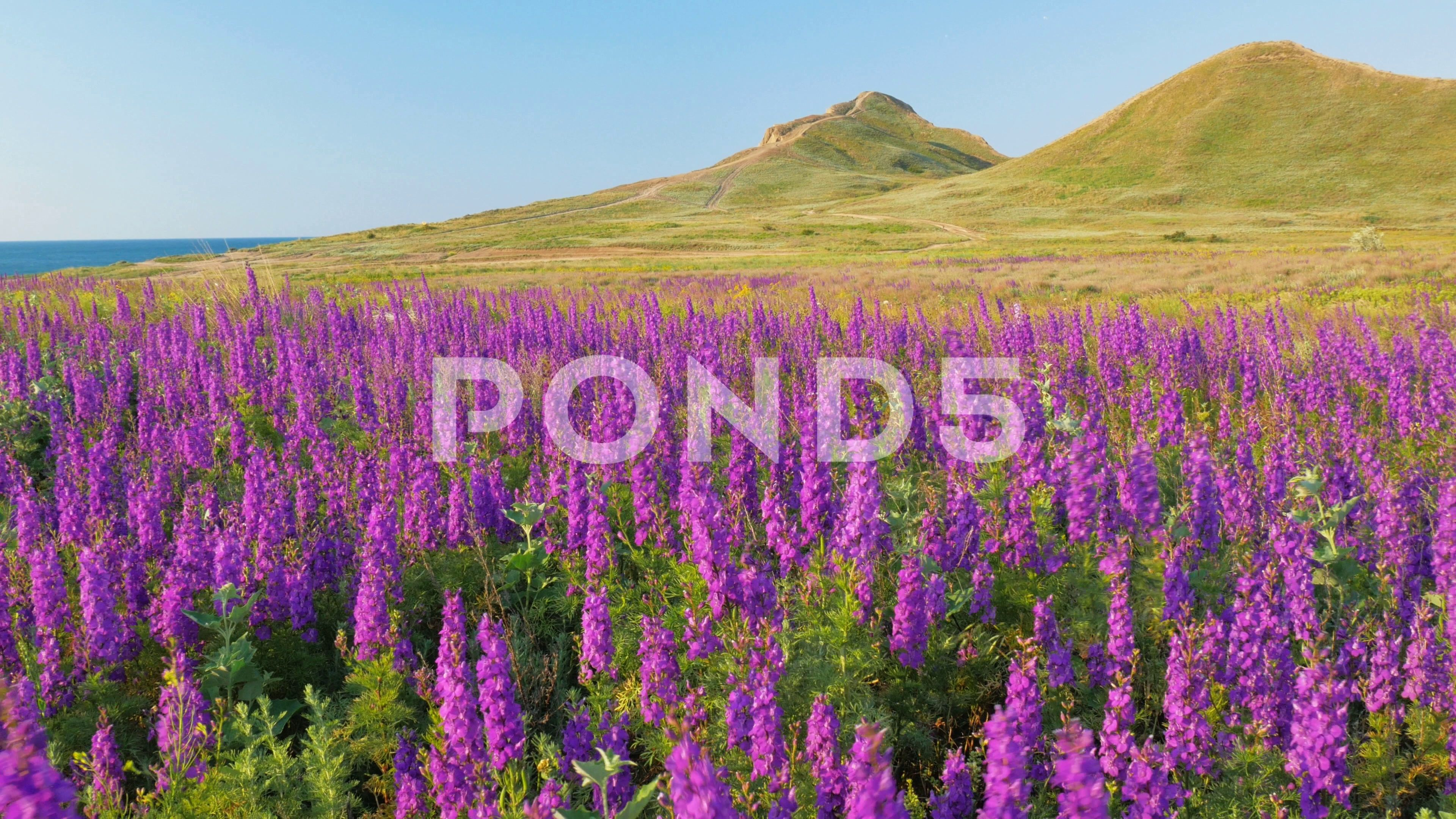 Beautiful Spring Nature Stock Footage Ad Spring Beautiful Nature Footage Nature Beautiful Nature