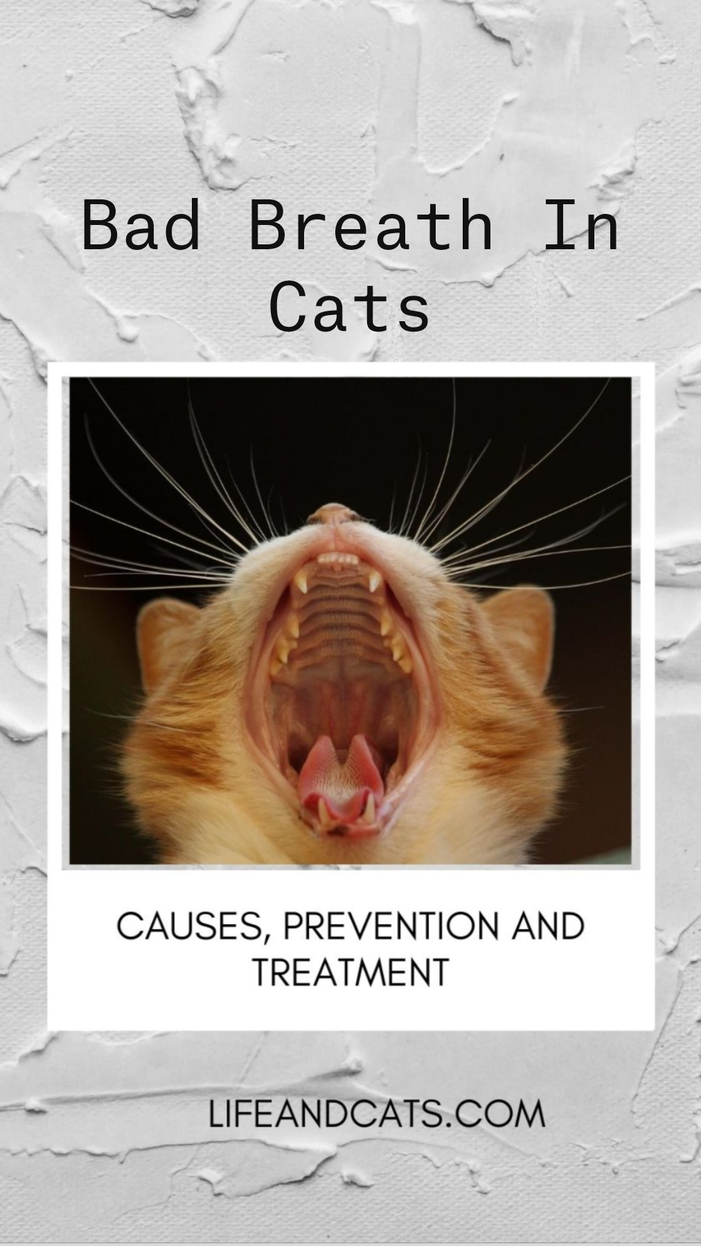 Bad Breath In Cats An Immersive Guide By Life Cats Cat And Kitten Care Tips