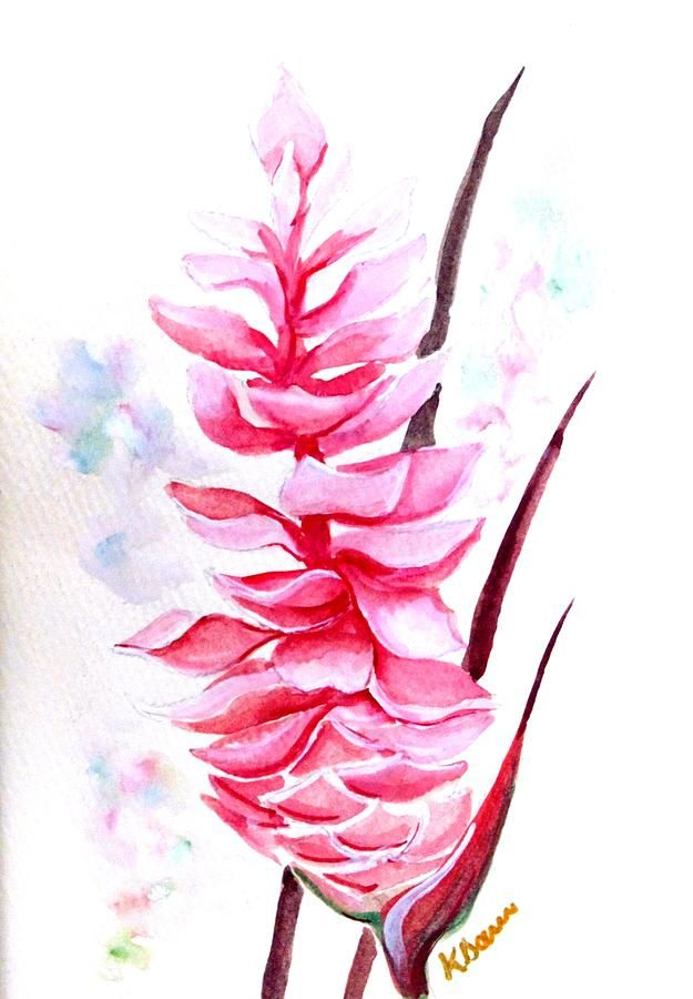 Pink Ginger Lily 2 By Karin Dawn Kelshall Best Flower Art Pink Ginger Flower Drawing