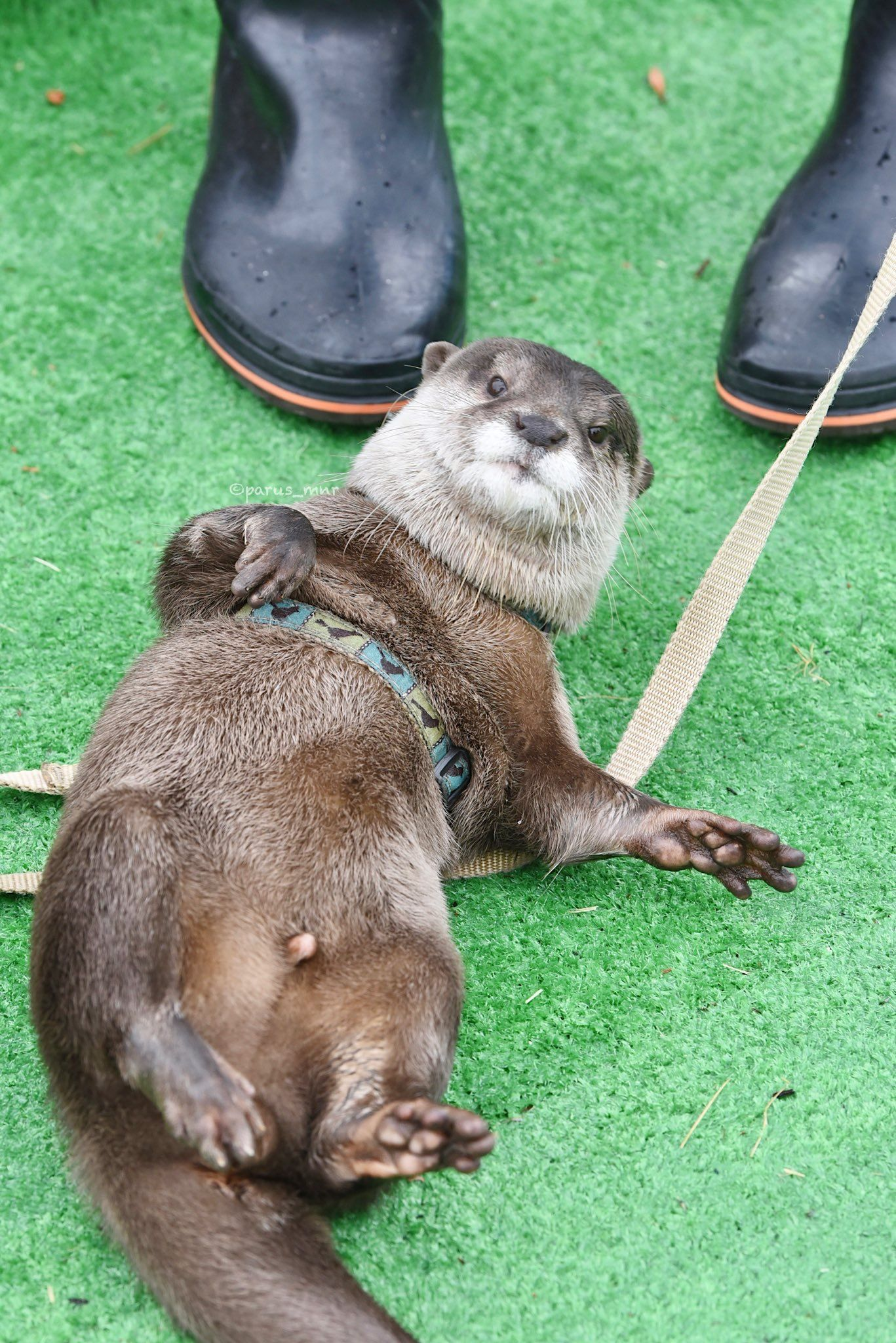 Pin by Jacqueline Robinson on Cute Cute animals, Otters