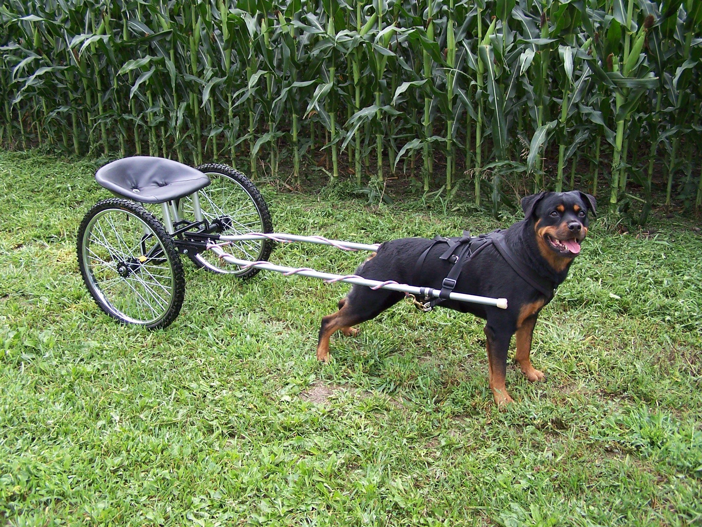 Custom Dog Carts Rottweiler Puppies Dogs Rottweiler