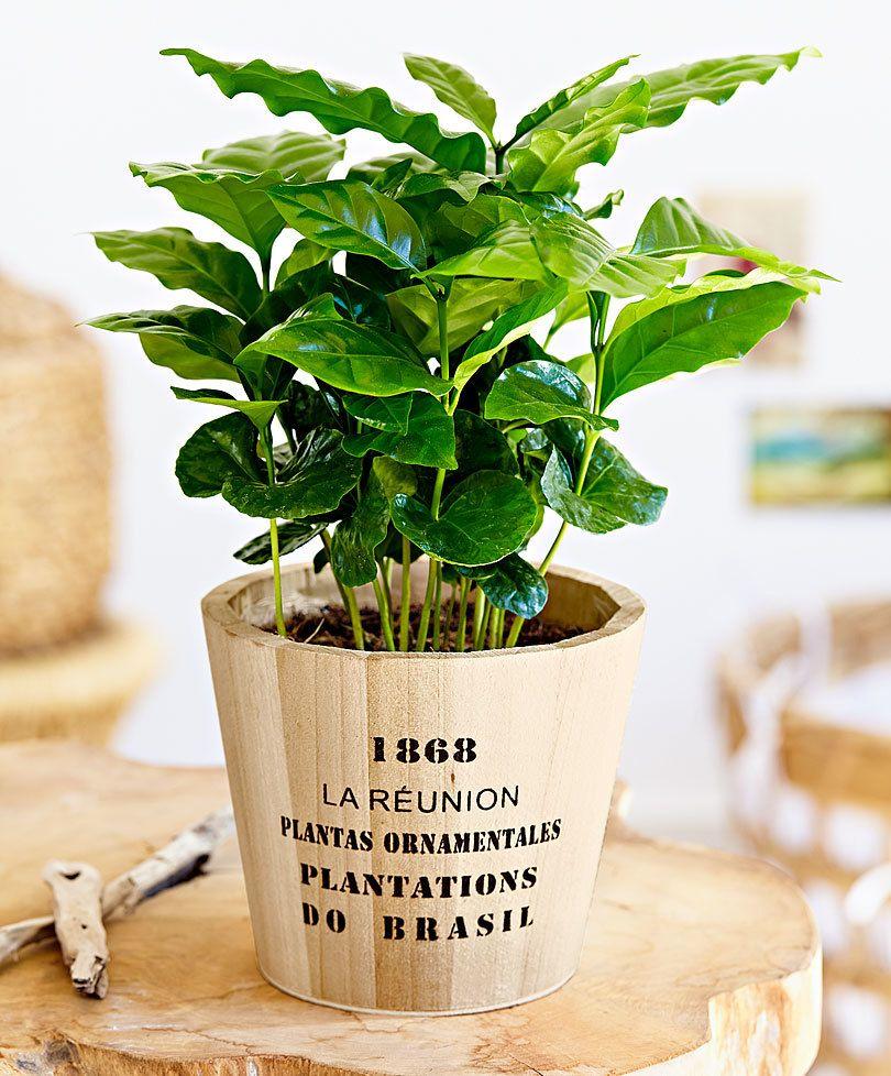 inomhus växter online