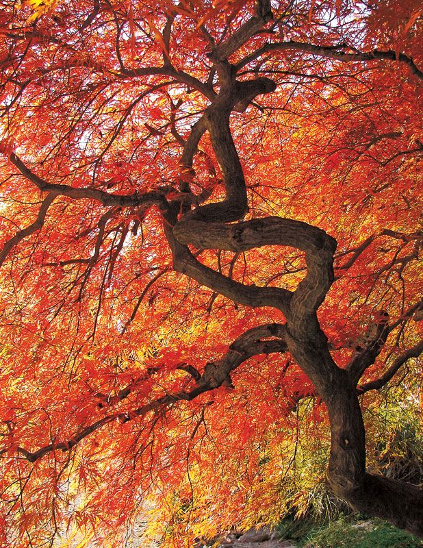 Colorful Canopy, a 500 piece jigsaw puzzle by Springbok