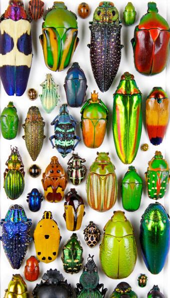 colorful beetles.