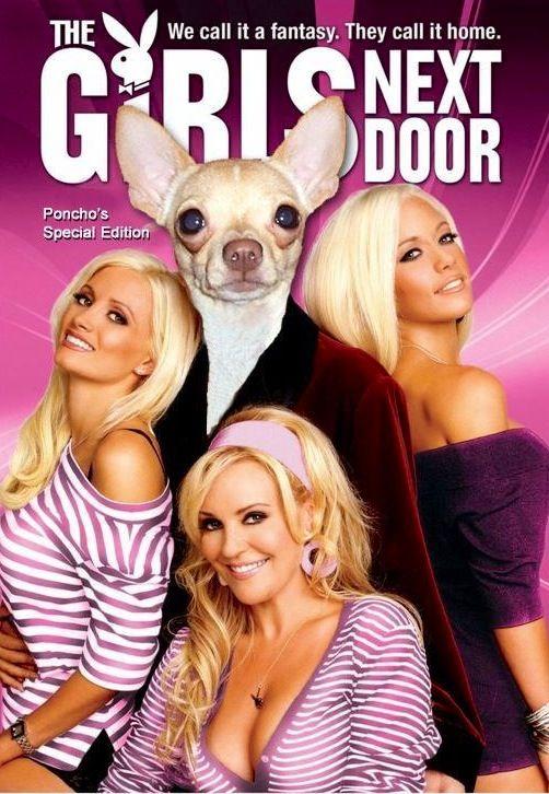 Girls Next Door Dog Edition Via Chihuahua Ha Ha On Facebook At Www